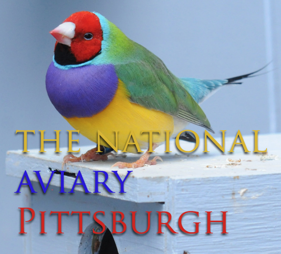 A Gouldian finch at the National Aviary in Pittsburgh. (Photo by Deep Creek Images)